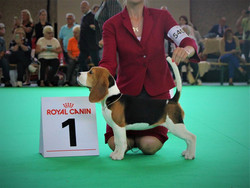 Best baby female at World dog show - 201