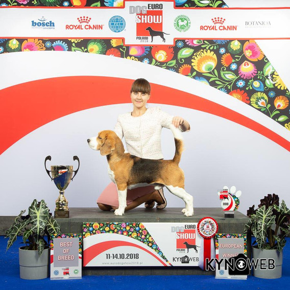 EDS-2018, Lion King of ring Airin's Style - Best of breed and BIG-2