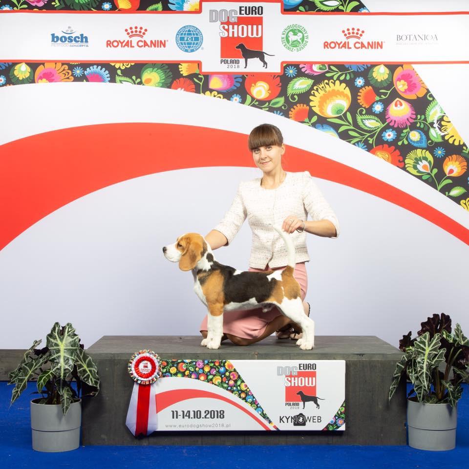 Irinstyle Eyes Catcher - Best Puppy of Breed, Euro dog show - 201