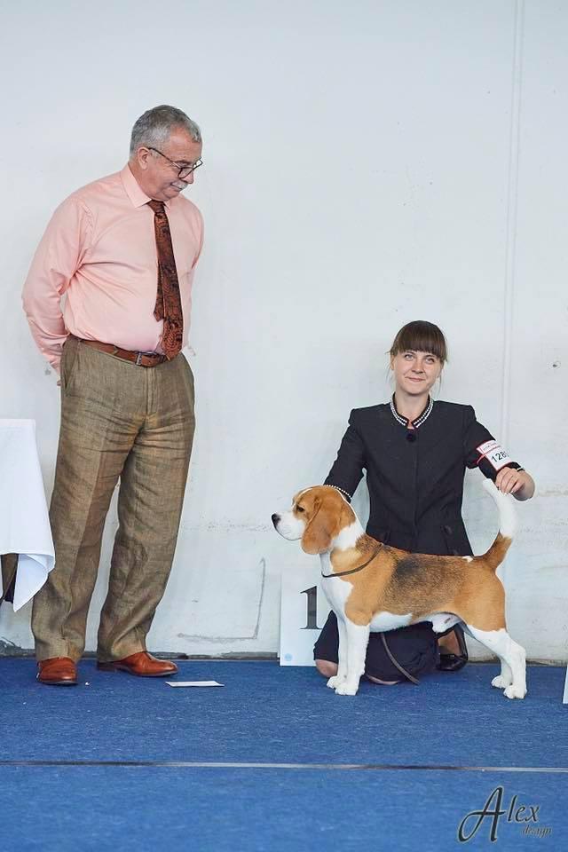 Open class winner European dog show 2019