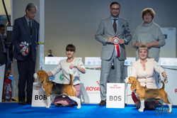 Best of breed at European dog show - 2018