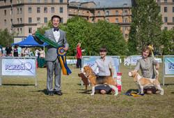 Beagle Party - 2018 Best of Breed - Lion