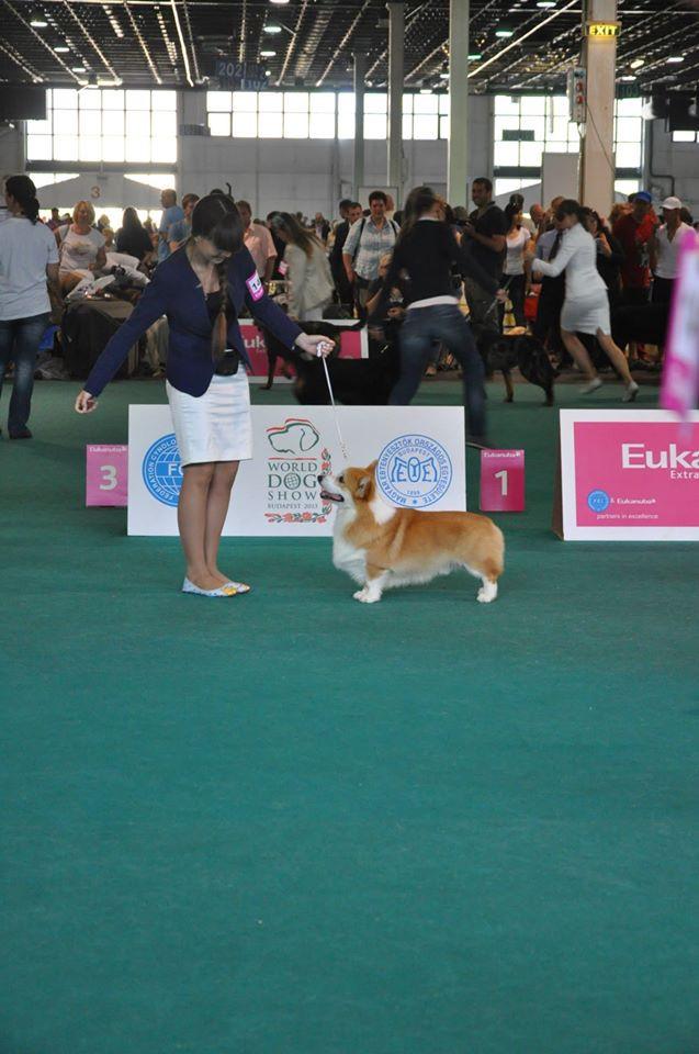 Junior World Winner - 2013 Экспо Маргаретс Достойный восхищения