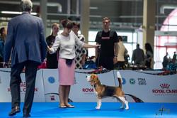 Euro dog show - 2018