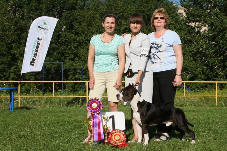 Best in show speciality