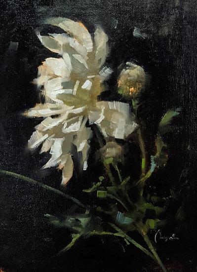 White in Night