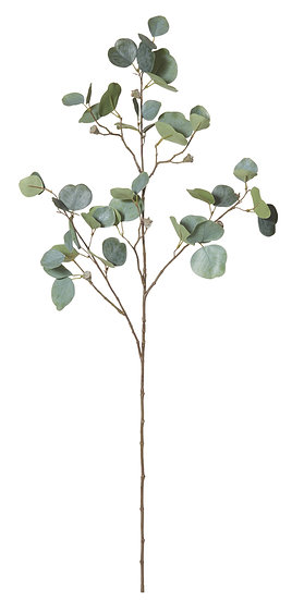 Eucalyptus Pot Stem 85cm