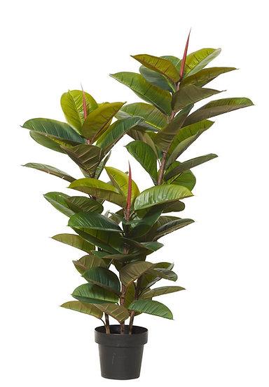 Rubber Plant 65x60x130cm
