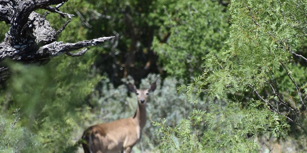 Hunt at Rocksport, TX for WhiteTail Deer