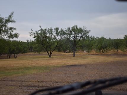 Exotics Ranch