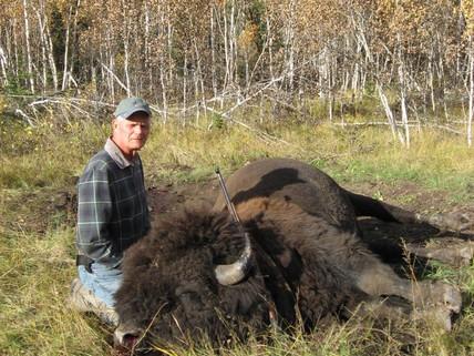 Canadian Woodland Bison