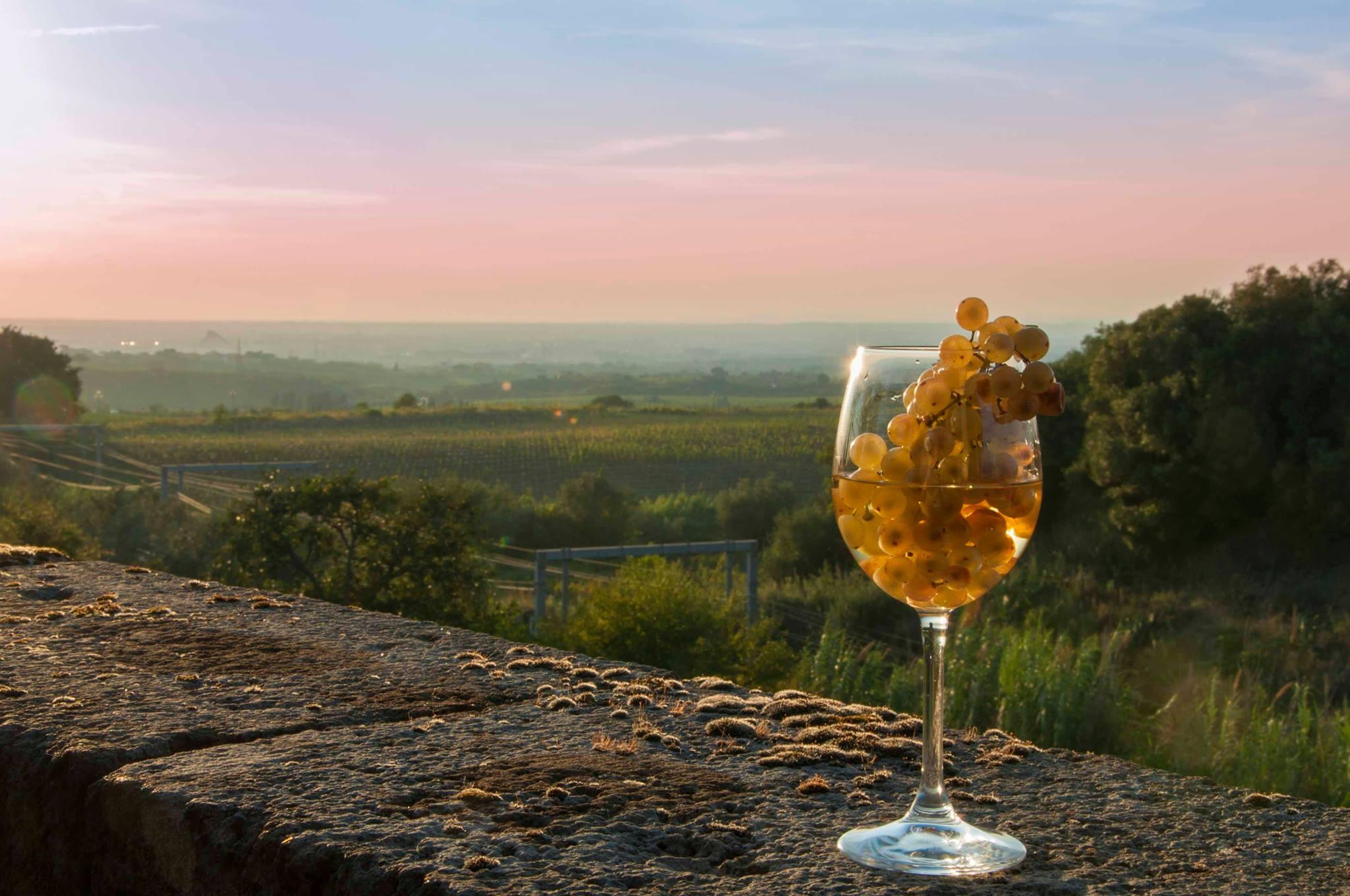 Casale Senni vigneti e uva Frascati