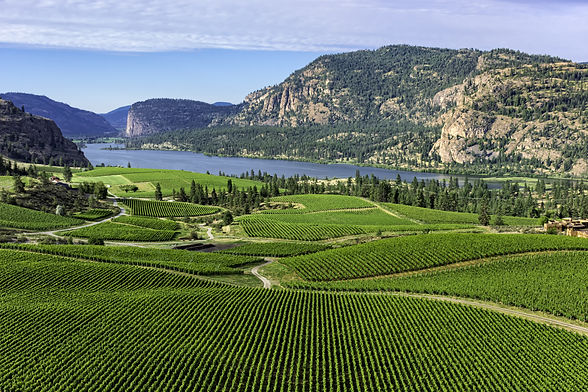 Wine Vineyards in the south Okanagan nea