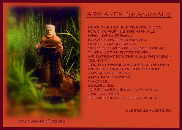 prayerfortheanimals_edited.jpg