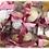Thumbnail: Paquete de 30 Cajita Sweet