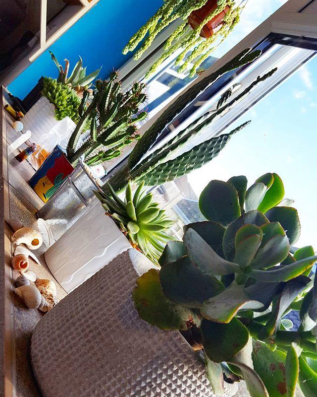 Cacti love!