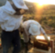 ΔΑΚΡΥ, dakri, Tinos honey, beekeepers