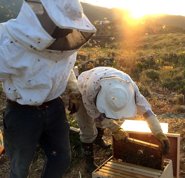 ΔΑΚΡΥ, dakri, Tinos honey, beekeepers