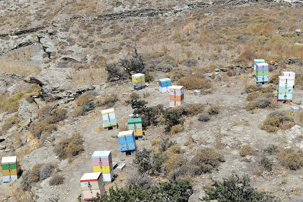 ΔΑΚΡΥ, dakri, Tinos honey, beehives, apiary
