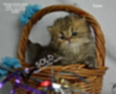 [Persian Kittens For Sale In Nevada][Persian Kittens For Sale In New Hampshire][Persian Kittens For Sale In New Jersey][Persian Kittens For Sale In New Mexico][Persian Kittens For Sale In New York][Persian Kittens For Sale In North Carolina][Persian Kittens For Sale In North Dakota][Persian Kittens For Sale In Ohio][Persian Kittens For Sale In Oklahoma][Persian Kittens For Sale In Oregon][Persian Kittens For Sale In Pennsylvania][Persian Kittens For Sale In Rhode Island][Persian Kittens For Sale In South Carolina][Persian Kittens For Sale In South Dakota][Persian Kittens For Sale In Tennessee][Persian Kittens For Sale In Texas][Persian Kittens For Sale In Utah][Persian Kittens For Sale In Vermont][Persian Kittens For Sale In Virginia][Persian Kittens For Sale In Washington][Persian Kittens For Sale In West Virginia][Persian Kittens For Sale In Wisconsin][Persian Kittens For Sale In Wyoming]Maincoon kittens][Ragdoll kittens]dollfacepersiankittens.com]