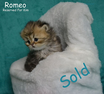 Persian Kittens For Sale In Mississippi][Persian Kittens For Sale In Missouri][Persian Kittens For Sale In Montana][Persian Kittens For Sale In Nebraska] [Persian Kittens For Sale In Arkansas][Persian Kittens For Sale In California][Persian Kittens For Sale In Colorado][Persian Kittens For Sale In Connecticut][Persian Kittens For Sale In Delaware][Persian Kittens For Sale In Florida][Persian Kittens For Sale In Georgia][Persian Kittens For Sale In Idaho][Persian Kittens For Sale In Illinois][Persian Kittens For Sale In Indiana][Persian Kittens For Sale In Iowa][ Fancy Feast Persians][Whiskor Oaks Cattery][Extasse Persians][Dollfacepersiankittens.com][ultra rare persian kittens][Persian Kittens For Sale In Kansas][[Persian Kittens For Sale In Kentucky][Persian Kittens For Sale In Louisiana][Persian Kittens For Sale In Maine][Persian Kittens For Sale In Maryland][Persian Kittens For Sale In Massachusetts][Persian Kittens For Sale In Michigan][Persian Kittens For Sale In Minnesota][