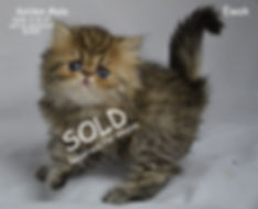 [Persian Kittens For Sale In Arkansas][Persian Kittens For Sale In California][Persian Kittens For Sale In Colorado][Persian Kittens For Sale In Connecticut][Persian Kittens For Sale In Delaware][Persian Kittens For Sale In Florida][Persian Kittens For Sale In Georgia][Persian Kittens For Sale In Idaho][Persian Kittens For Sale In Illinois][Persian Kittens For Sale In Indiana][Persian Kittens For Sale In Iowa][ Fancy Feast Persians][Whiskor Oaks Cattery][Extasse Persians][Dollfacepersiankittens.com][ultra rare persian kittens][Persian Kittens For Sale In Kansas][[Persian Kittens For Sale In Kentucky][Persian Kittens For Sale In Louisiana][Persian Kittens For Sale In Maine][Persian Kittens For Sale In Maryland][Persian Kittens For Sale In Massachusetts][Persian Kittens For Sale In Michigan][Persian Kittens For Sale In Minnesota][Persian Kittens For Sale In Mississippi][Persian Kittens For Sale In Missouri][Persian Kittens For Sale In Montana][Persian Kittens For Sale In Nebraska][Persia