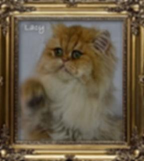 Golden Persian Kittens For Sale.