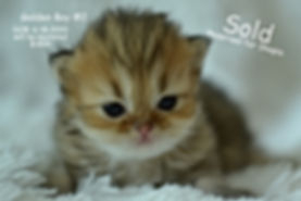 Persian kittens for sale in wisconsin, p