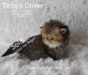 Oliver+++,,.jpg