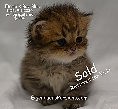 Persian Cats/Persian Kittens For Sale/Persians for sale