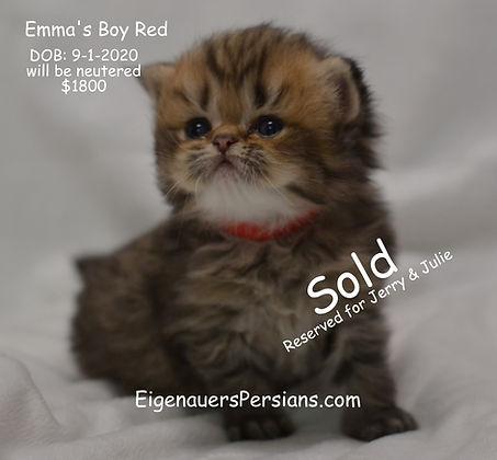 Wisconsin Golden Persian Kittens For Sale In Wisconsin