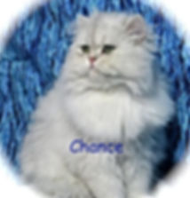 Persian Kittens For Sale. We Specialize In Golden Persian Kittens. We Also have Silver Persians  From Time To Time. Our Kittens Come with a Health Guarantee. If Your Interested In A Persian  I Have One For You..