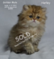 ][Persian Kittens For Sale In New Hampshire][Persian Kittens For Sale In New Jersey][Persian Kittens For Sale In New Mexico][Persian Kittens For Sale In New York][Persian Kittens For Sale In North Carolina][Persian Kittens For Sale In North Dakota][Persian Kittens For Sale In Ohio][Persian Kittens For Sale In Oklahoma]  [Persian Kittens For Sale In Oregon][Persian Kittens For Sale In Pennsylvania][Persian Kittens For Sale In Rhode Island][Persian Kittens For Sale In South Carolina][Persian Kittens For Sale In South Dakota][Persian Kittens For Sale In Tennessee][Persian Kittens For Sale In Texas][Persian Kittens For Sale In Utah][Persian Kittens For Sale In Vermont][Persian Kittens For Sale In Virginia][Persian Kittens For Sale In Washington][Persian Kittens For Sale In West Virginia][Persian Kittens For Sale In Wisconsin]