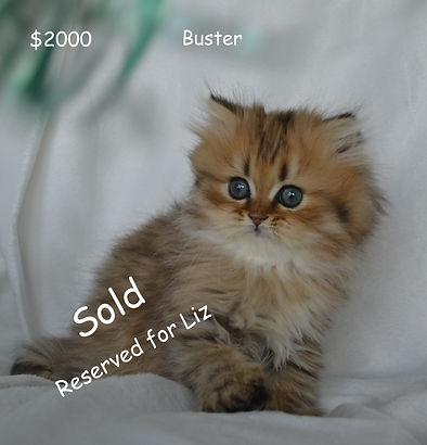 Liz Bustert #2Persian Cats For, persian