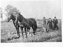 Work Horses Gill Tract, c.1900