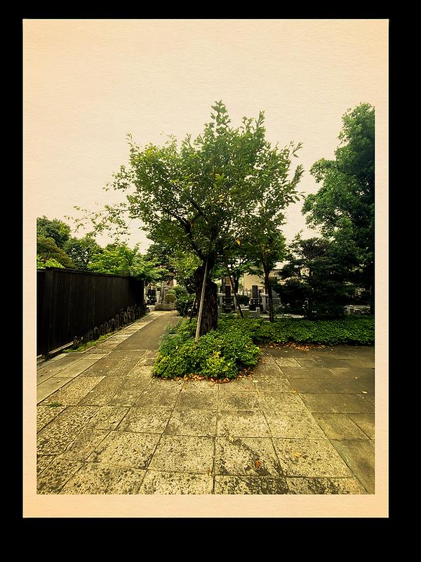 白華.png