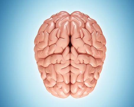 human-brain-illustration-royalty-free-il