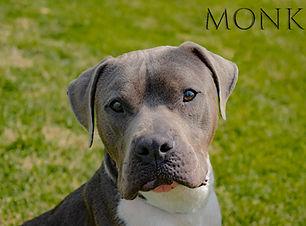 Monkster2.jpg