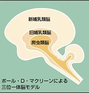 2-1.3つの脳についてあなたは知っていましたか?