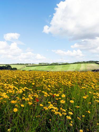Shire-Farm-landscape2.jpg