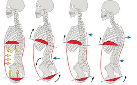 「骨盤底筋 横隔膜」の画像検索結果