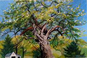 #8 miharu -  oil on canvas  Old Apple Tr