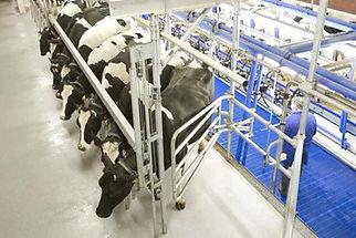 melkstandsysteme.jpg