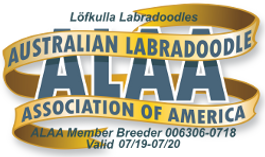 Lofkulla Labradoodles ALAA International