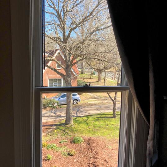 Window Cleaning Albemarle