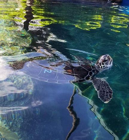 turtleturtle.jpg