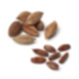 Pili nuts in shells