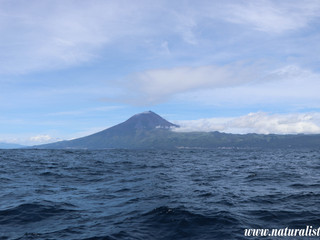 |7-5-2019 am| Lonely whale watchers' off Pico Island