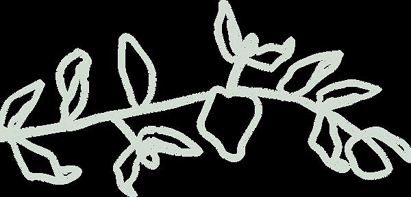 bontanical - plant.png