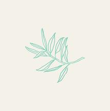 Holistique-leaf-blocked_edited_edited_ed
